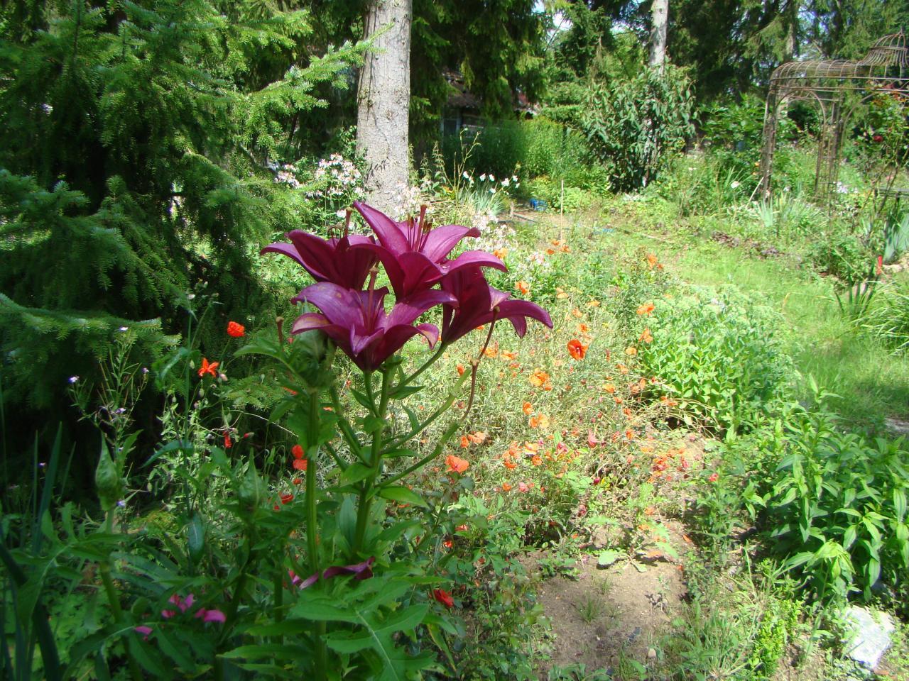 Chambres d 39 h tes en for t de compi gne for Guide des fleurs du jardin