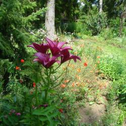 Le jardin fleuri des chambres d'hotes du jardin de saint jean