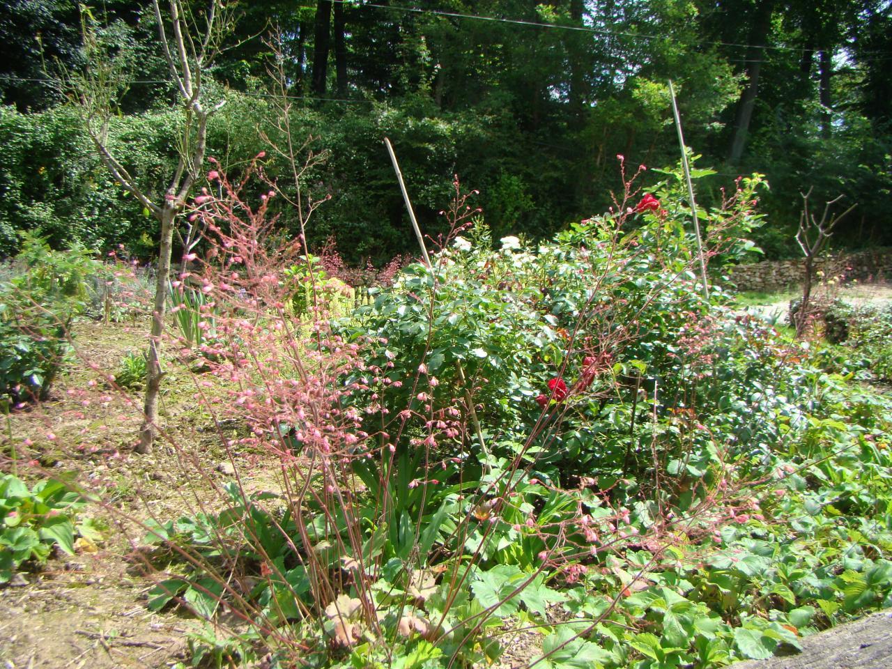 Les fleurs du yin du jardin de saint jean